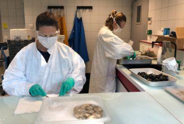 Aucune trace de SARS-CoV-2 dans les premiers échantillons d'eau de mer et de coquillages analysés