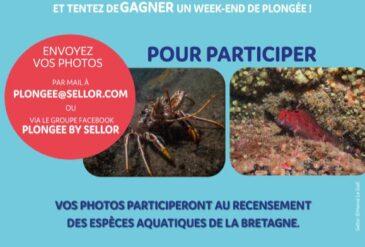 Concours photos – Déclic pour l'océan